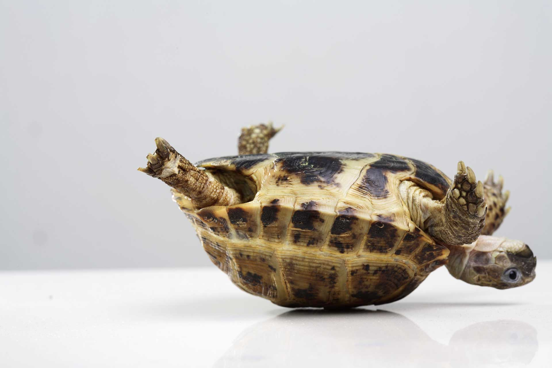 upside down tortoise showing resilience and positivity